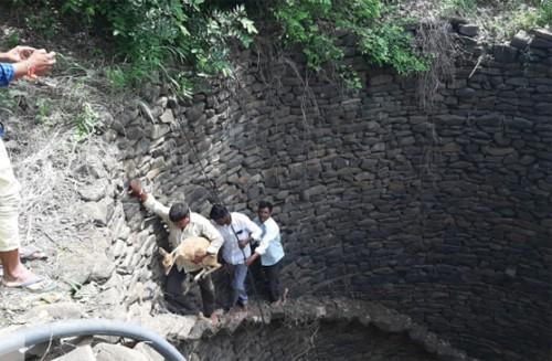 బావిలో పడ్డ జింకను రక్షించిన అటవీ అధికారులు