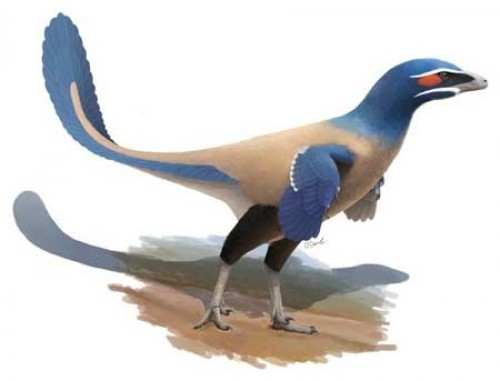 New bird-like dinosaur species identified