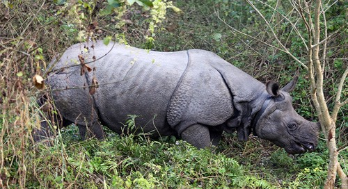 Nepal gifts rhino couple to China
