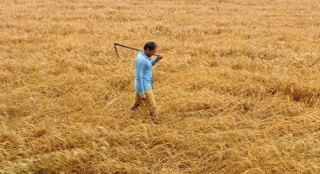 Nearly 35 lakh tonnes paddy procured in Punjab