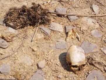 నల్లగొండ జిల్లాలో రెండు అస్థిపంజరాలు గుర్తింపు